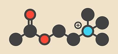 Acetylchloline Neurotransmitter Molecule Print by Molekuul