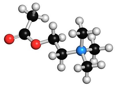 Acetylcholine Neurotransmitter Molecule Print by Molekuul