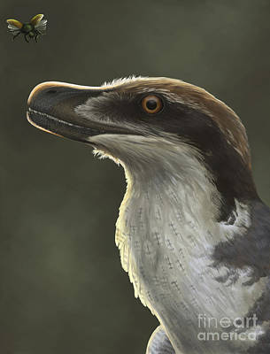 Acheroraptor Dromaeosaurid Dinosaur Print by Emily Willoughby