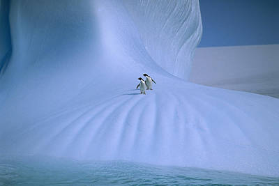 Penguin Photograph - Adelie Penguins On Iceberg Antarctica by Peter Sinden