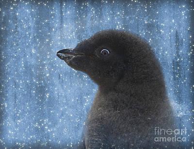 Nature An Bird Photograph - Adelie Winter Magic... by Nina Stavlund