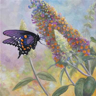 Zaccheo Painting - Admiral Butterfly by John Zaccheo