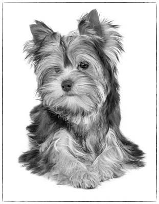 Dog Photograph - Adorable And Charming Dog by Konstantin Gushcha