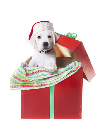 Adorable Christmas Puppy  Print by Diane Diederich