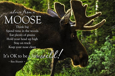 Advice From A Moose Original by Teri Virbickis