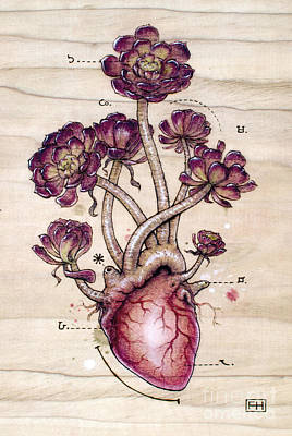 Pyrography Mixed Media - Aeonium Heart by Fay Helfer