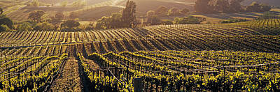 Vineyard In Napa Photograph - Aerial View Of Rows Crop In A Vineyard by Panoramic Images