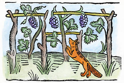 Grape Vines Drawing - Aesop The Fox & The Grapes by Granger