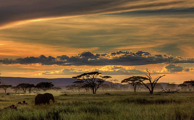 Savannah Photograph - Africa by Amnon Eichelberg