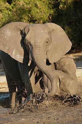 Africa, Botswana, Chobe National Park Print by Joe and Mary Ann Mcdonald