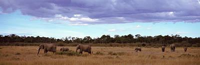 Africa, Kenya, Masai Mara National Print by Panoramic Images