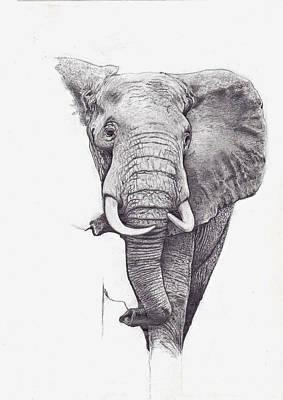 Andrew Harrison Digital Art - African Elephant  by Andrew Harrison