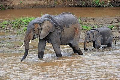 Mother Elephant Photograph - African Elephant Mother And Calf by Bildagentur-online/mcphoto-schulz