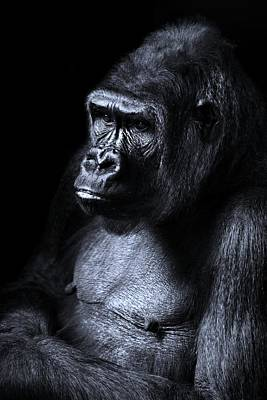 Cabin Wall Photograph - African Gorilla In Deep Thought by Movie Poster Prints