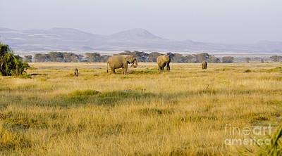 Nature Digital Art - African Landscape by Pravine Chester