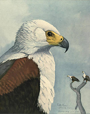 Eagle Painting - African Sea Eagle  by Louis Agassiz Fuertes