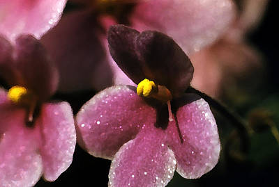 African Violet Print by Retro Images Archive