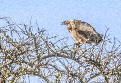 Vulture Digital Art - African White-backed Vulture by Liz Leyden