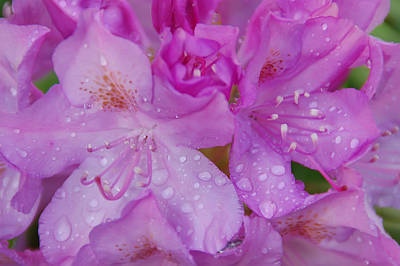 Aimeemaher Photograph - After The Rain by Aimee L Maher Photography and Art Visit ALMGallerydotcom