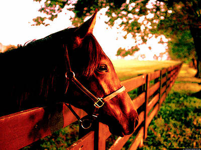 Horse Photograph - Afternoon At The Farm by VRL Art