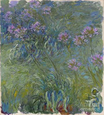 Agapanthus Flowers 1914-17 Print by Claude Monet
