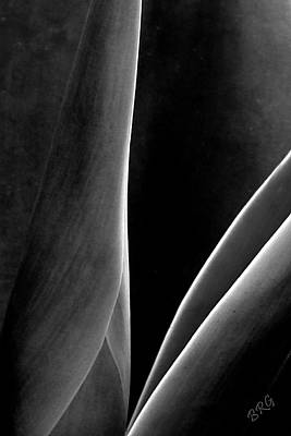 Agave Print by Ben and Raisa Gertsberg