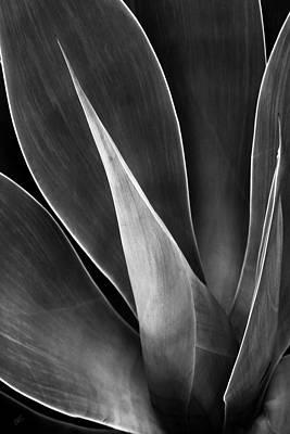 Abstract Digital Art Photograph - Agave No 3 by Ben and Raisa Gertsberg