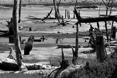 California Photograph - Aging Wetlands by Denise Dube
