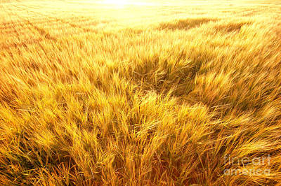 Cereal Photograph - Agriculture Background by Michal Bednarek