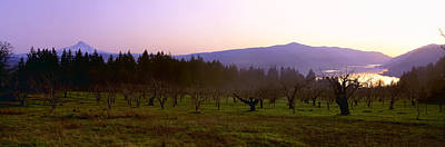 White Salmon River Photograph - Agriculture - Dormant Pear Orchard by Charles Blakeslee