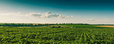 Agriculture Field And Perfect Sky Print by Daniel Barbalata