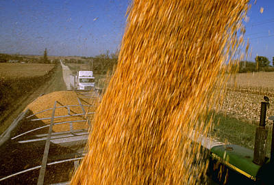 Agriculture - Harvested Grain Corn Print by R. Hamilton Smith