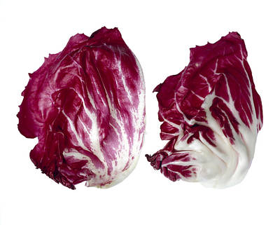 Agriculture - Radicchio Leaves Closeup Print by Ed Young