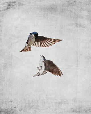 Tree Swallow Photograph - Airobatics - Tree Swallows by Jai Johnson