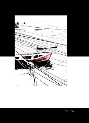 Albatros Print by Xoanxo Cespon