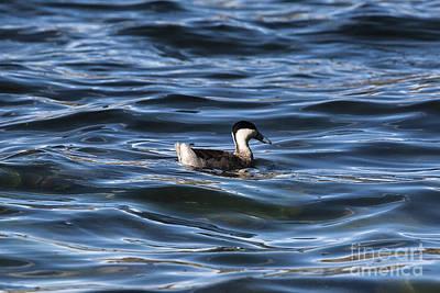Albatross Bird In Galapagos Island Original by Lucas Guardincerri