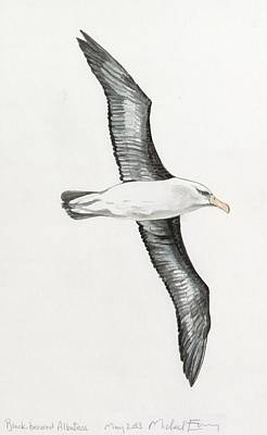 Albatross Painting - Albatross by Michael Earney