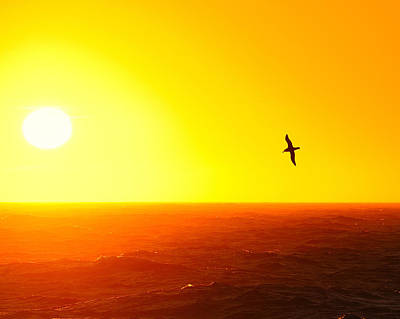 Albatross Over The Scotia Sea Print by Tony Beck