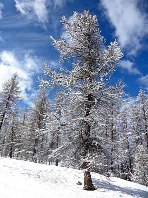Albero Con La Neve Print by Pierfrancesco Maria Rovere