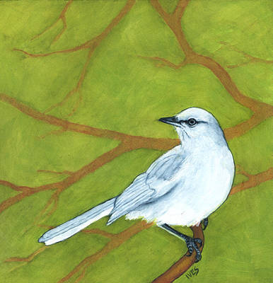Mockingbird Painting - Albino Mockingbird by Rebecca Ives