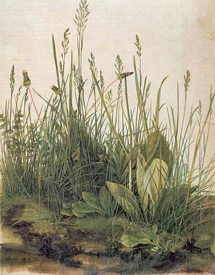 Albrecht Durer Great Piece Of Turf Print by Albrecht Durer