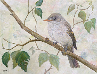 Alder Flycatcher Original by Sandy Clift