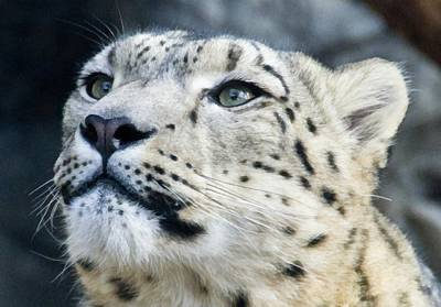 Leopard Photograph - Alert by Angelina Vick