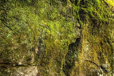 Algae Rock Original by George Kenhan