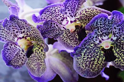 Aliens. Orchids From Keukenhof. Netherlands Print by Jenny Rainbow