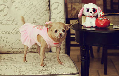 Doggy Photograph - All Dressed Up by Laurie Search