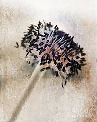 Anemone Photograph - All That Is Left by Clare Bevan
