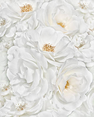 Ivory Rose Photograph - All The White Roses  by Jennie Marie Schell