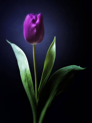 Standing Digital Art - Black And White Purple Tulips Flowers Art Work Photography by Artecco Fine Art Photography