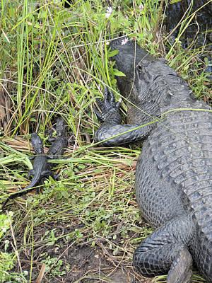 Alligator-4 Print by Rudy Umans